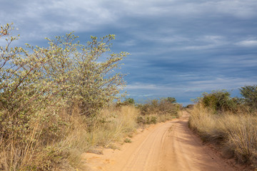 dusty route out of kalahari desert namibia africa