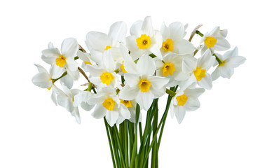 Photo sur Aluminium Bouquet of blooming white daffodils isolated on white background. Spring flowers.