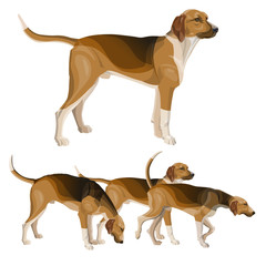 Hunting dog set