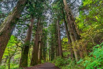 箱根芦ノ湖周辺の風景 旧東海道 箱根宿の杉並木