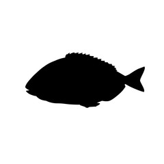 Silhouette of gilt-head bream