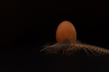 brown egg with bird feather on black backround