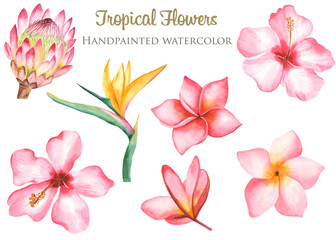 Watercolor tropical leaves and flowers. Banana, Monstera, Plumeria, Protea, Heliconia, Hibiscus on a white background. Perfect for cards, invitations, wedding and summer designs.