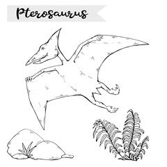 Vector Pterosaur with plant and stone over white.Jurassic Wildlife.