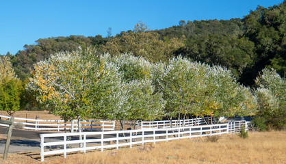 White fence along country road in Central California United States