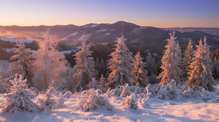 Snowy forest in winter mountains