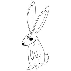 Hare rabbit hand drawn. Vector illustration of a cartoon rabbit, hare. Funny hare icon.
