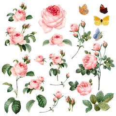 Hand drawn pink roses vector collection