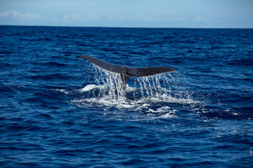 Whale tail on water surface, ocean background