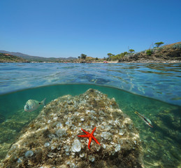 Mediterranean sea coast in summer and rock with a starfish and fish underwater, split view half above and below water surface, Spain, Cadaques, Portlligat, Costa Brava, Catalonia