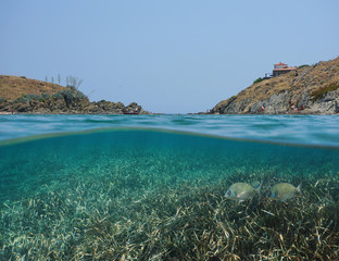 Mediterranean sea rocky coast with tourists in summer and Posidonia grass with fish underwater, split view half above and below water surface, Spain, Cadaques, Portlligat, Costa Brava, Catalonia