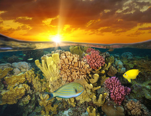 Sunset sky and colorful coral reef with fish underwater sea, split view half above and below water surface, Bora Bora, French Polynesia, south Pacific ocean