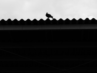 Bird silhouette on the roof