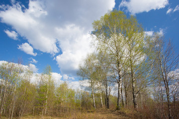 Spring landscape with clouds
