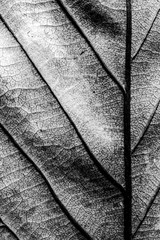 Abstract Close Up of Tree Leaf for Background