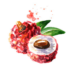 Fresh lychee fruits. Watercolor hand drawn illustration  isolated on white background