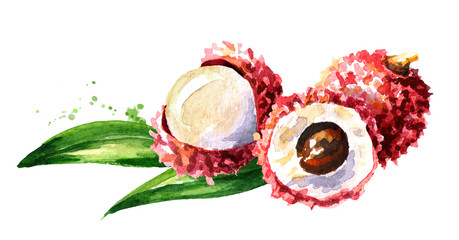 Fresh lychee. Watercolor hand drawn illustration,  isolated on white background