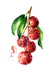 Fresh lychees on the branch with leaves. Watercolor hand drawn illustration,  isolated on white background