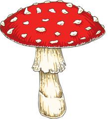 Red Amanita Fly Agaric Mushroom