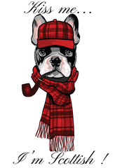 French buldog with a scottish cap and a pipe