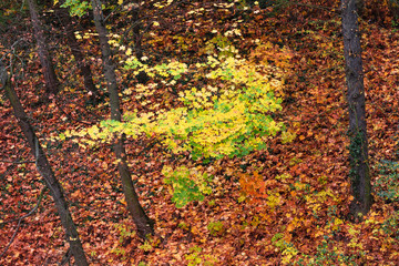 autumn leaves of trees in park
