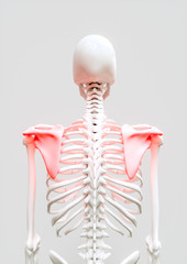 Shoulder pain - 3D Rendering