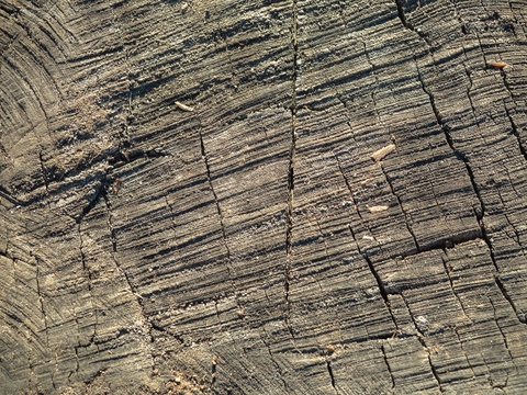 Grey wood texture, close up. Striped wooden surface background. An old woden structure. Abstract background. Abstract pattern