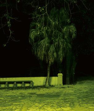 Grosse Palme bei Nacht in botanischem Garten in Palermo auf Sizilien