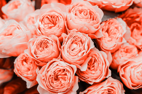 Beautiful living coral roses flowers bouquet close up. Spotted on the flower market.