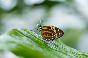 Side view of butterfly on leaf