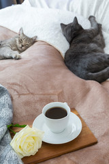 Cats Resting By Coffee And Rose In Bed