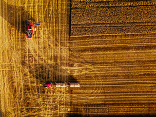 Wall Mural - Harvest of wheat field