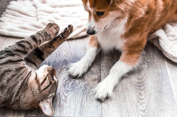 cat and dog play on the floor