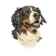 Bernese Mountain Dog isolated on white background. Realistic Portrait of Berner Sennenhund. Large Dog Breeds. Animal art collection: Dogs. Hand drawn pet illustration. Design template for pet shop