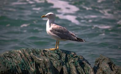 Italy beauty, seagull in Venice, Venezia