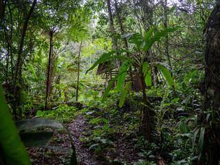 Hut in the Amazon Jungle