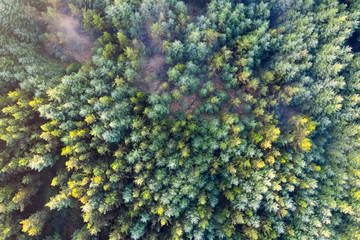 Overhead aerial view of an evergreen pine tree forest Wall mural