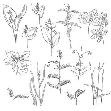 Set of floral elements for design. Forest plants