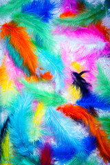 collection pen feathers birds background plumage colorful palette bright green blue white