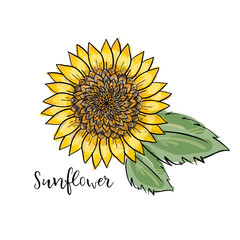 Hand drawn isolated illustration. Colorful summer sketch, watercolor style. Bright and blurred sunflower with leaves. inscription sunflower. big yellow flower