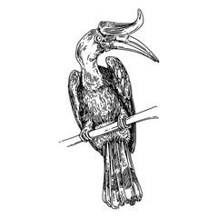 Hornbill sitting on branch tree. Sketch. Engraving style. Vector illustration.