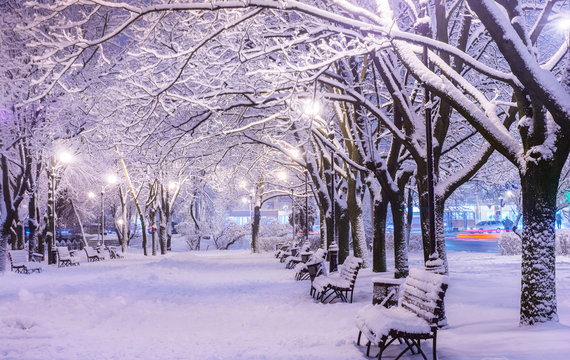 Amazing winter night landscape of snow covered bench among snowy trees and shining lights during the snowfall. Artistic picture. Beauty world.