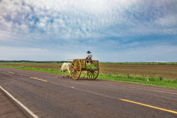 Wall Murals South America Country A local Paraguayan transports sugarcane with his ox cart.