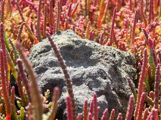 Sand stone among the grass