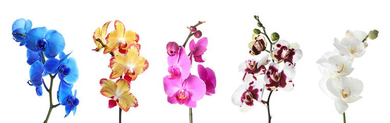 Tuinposter Orchidee Set with different color orchid flowers on white background