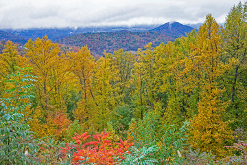Brilliant fall colors in the mountains of the Smokies.