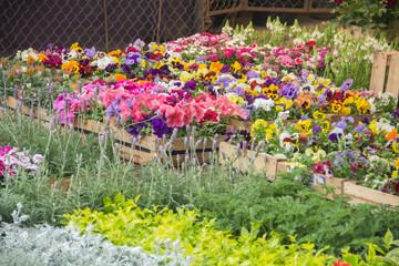 Variedad de flores en vivero