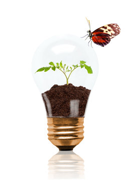 Young Seedling Growing Out of Soil Inside Light Bulb With Butterfly