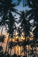 beautiful view of the sea through the palm trees at sunset