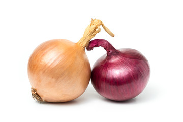 red onion (Allium cepa) fresh isolated Is a plant that uses the roots or leaves and many nutrients on white background and clipping path